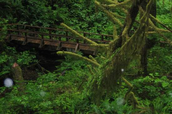 10 of the Most Amazing Rain Forests in the World