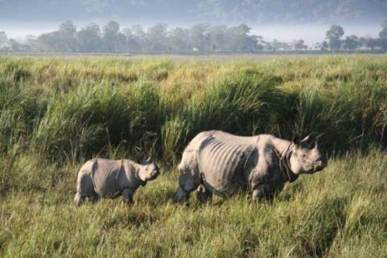 Explore Two UNESCO World Heritage Nature Sites in India